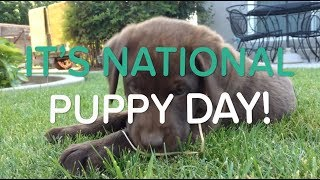 Happy National Puppy Day