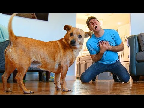 Xxx Mp4 Faking My Death In Front Of My Dog Funny Dog Reacts 3gp Sex