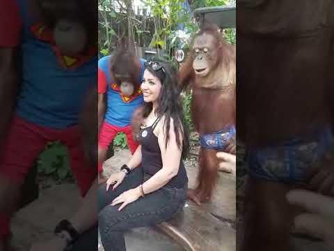Xxx Mp4 Gorila Sex Beauty Lady 3gp Sex
