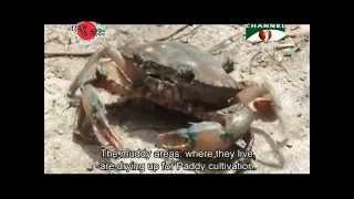 Nature and Life - Episode 156 (Crabs of Bangladesh)