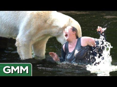 5 Dumbest Zoo Animal Encounters