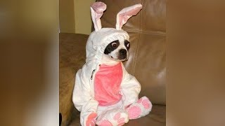 Best EASTER FAILS and FUNNY MOMENTS - You