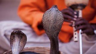 क्या सच में बीन की धुन पर नाचते है सांप, जानिए सच्चाई…!!   Snake Dance Mystery REVEALED
