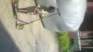 Video(006).3gp