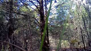 .300 winchester magnum vs tree