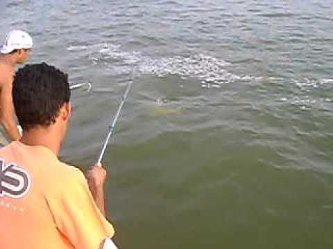 Peixe Dourado de 17 kg