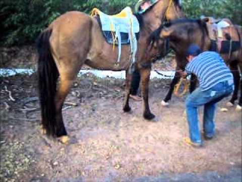 Cavalos e eguas