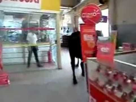 Boi invade o Supermercado Gbarbosa no Eduardo Gomes em São Cristovão