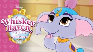 Where's Taj? | Whisker Haven Tales with the Palace Pets | Disney Junior
