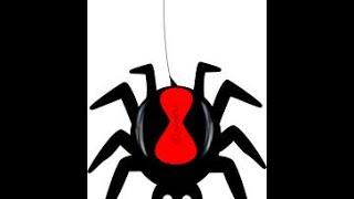 Spider the predator