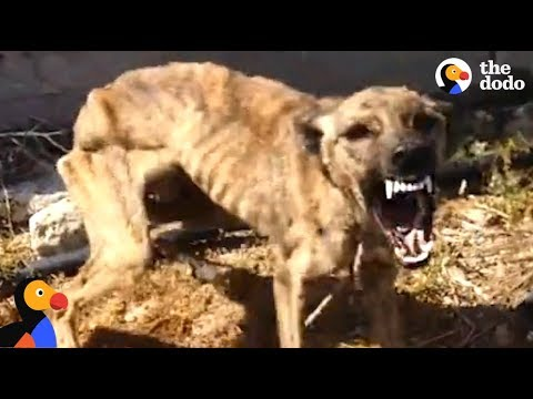 Xxx Mp4 Starved Scared Dog Is Transformed By Love The Dodo 3gp Sex