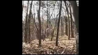 ترسناک ترین ویدئو واقعی از روح +18