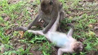 Funniest Monkey Holding Male Monkey Penis Daily Monkeys Man #119