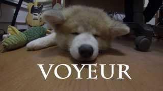 VOYEUR - Sleeping at Studio