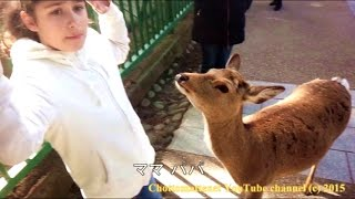 Japan Nara - Trying to Feed a Deer :)