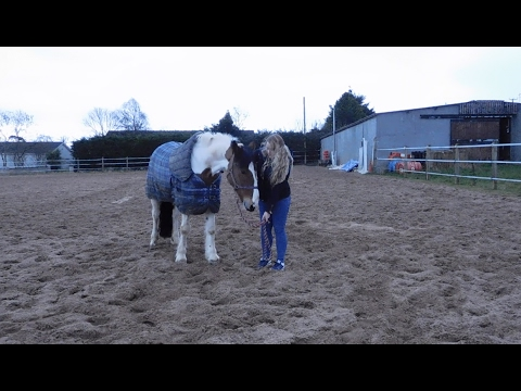 Xxx Mp4 How To Teach Your Horse To Lie Down Without Force 3gp Sex