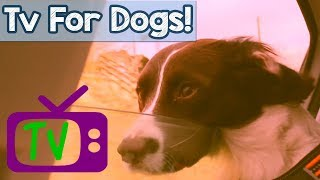 VIDEOS+FOR+DOGS%21+TV+for+Dogs%2C+Hours+of+Entertainment+for+Dogs+and+Puppies+with+Relaxing+Music%21+%F0%9F%90%95+%F0%9F%93%BA