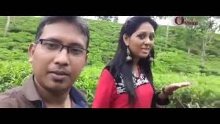 TEA GARDEN OF BANGLADESH.