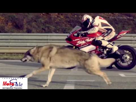 Extreme moto and girls 3