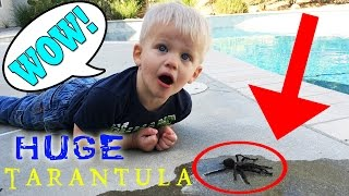 HUGE TARANTULA ENCOUNTER!
