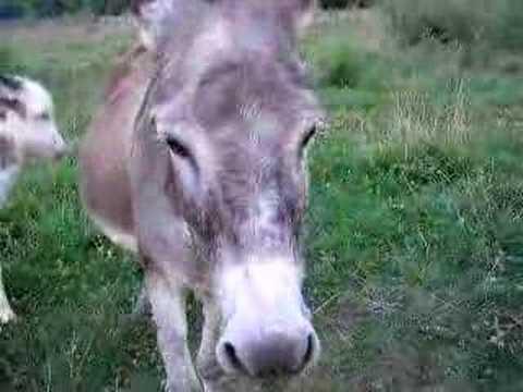Xxx Mp4 Hot Donkey 3gp Sex