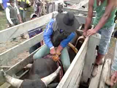 treino na b 90 do zinho rodeio em touro