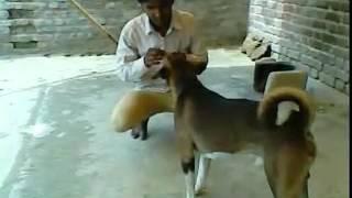 Teri Meherbaniyan Hindi video mp4
