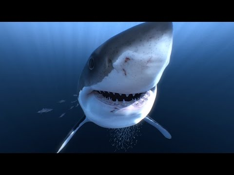 Xxx Mp4 Great White Sharks 360 Video 4K Close Encounter On Amazing Virtual Dive 3gp Sex