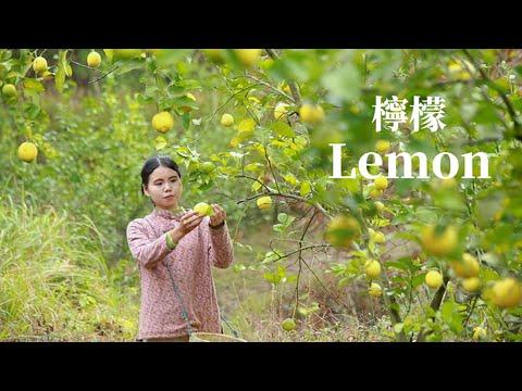 Lemon harvest I make it into lemon tea and more delicious food ▎Lizhangliu