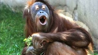animal video funny , pets and baby  - Part 4