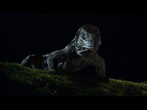 serpents lair 1995avi vidoemo emotional video unity
