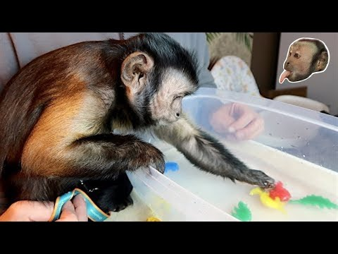 Xxx Mp4 Monkey Plays With Magic Grow Dinosaur 3gp Sex