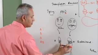 Hematology Lecture 1 Blood Transfusion Reaction Part 1/3