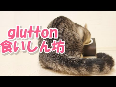 cute cat loves wet cat food / 食いしん坊な猫はウェットフードも勿論好き【猫 かわいい】