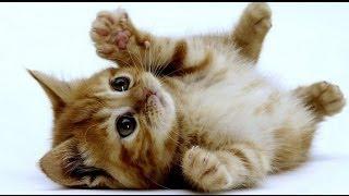 Le Chaton : choix du chaton, éducation, soins... Tout savoir !