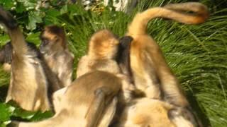 spider monkey orgy