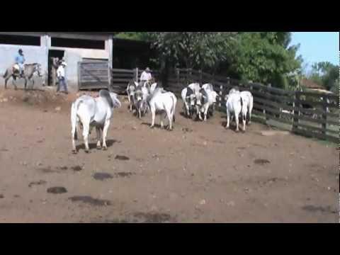 TOUROS BK TOUROS TABAPUÃ PO 664.wmv