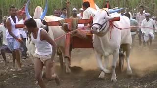 Yadawada bulls at Terabandi race Kolur