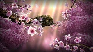 Season Zen HD Live Wallpaper