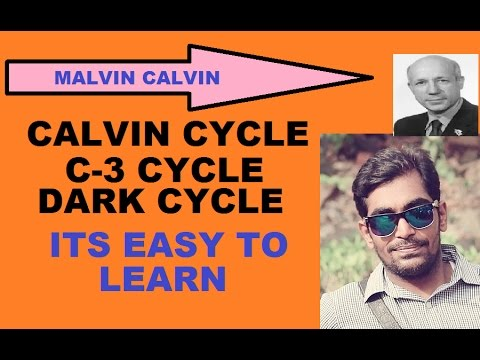 HOW TO LEARN CALVIN CYCLE IN EASY WAY