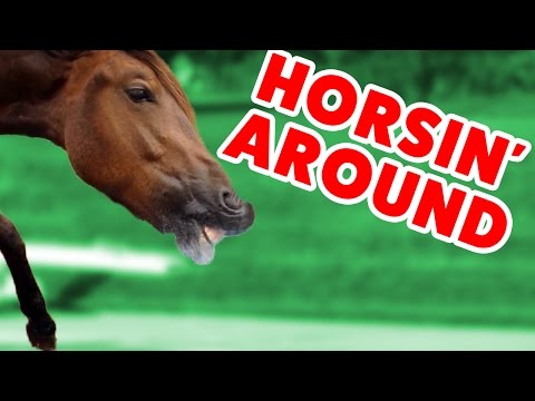 Top Funniest Horse Videos of 2016 Weekly Compilation Funny Pet Videos