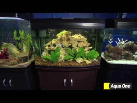Talking fish Different types of Aquarium choices Aqua One