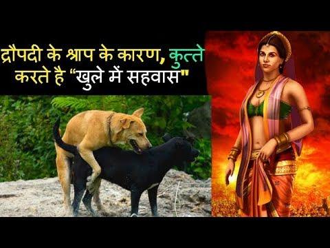 """द्रौपदी के श्राप के कारण, कुत्ते करते है """"खुले में सहवास"""" The Mahabharata Secret (HINDI)"""