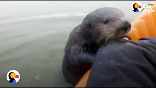 Otter Jumps On Kayak To Say Hello | The Dodo