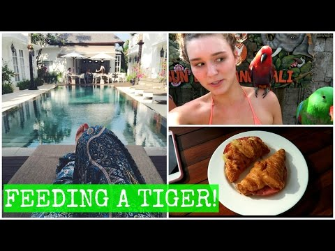 Having Lunch With A LION | Bali Vlog