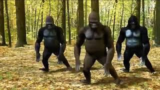 Gorilla dance cham cham cham