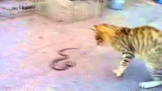 Кіт і змія