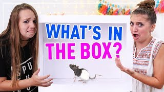 What's in the BOX Challenge!!! *LIVE CRITTERS* Would YOU do this?
