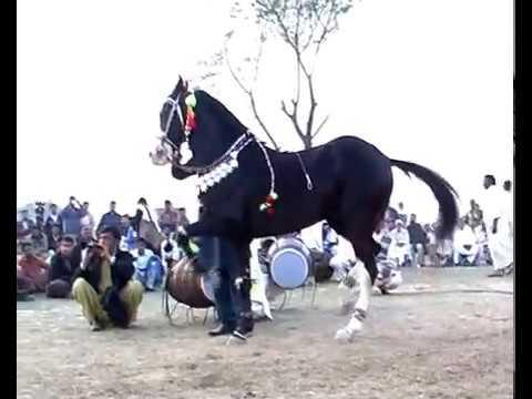 Harchahal Horse dancing maila sakrila sarai alamgir March 2012.part 2 3