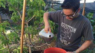 The BEST Organic Fertilizer